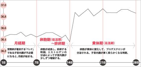 月経周期表